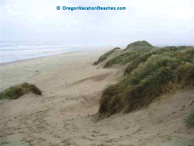Sand Dunes south of Florence Oregon