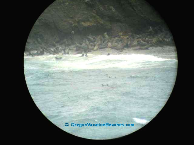 Seals on Seal Rock on Simpson Reef -- picture taken through telescope in the viewing area -- On Simpson Reef sw of Coos Bay, Oregon