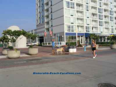 Virginia Beach picture - Boardwalk - Guy in blue shirt washing his 2 dogs under shower