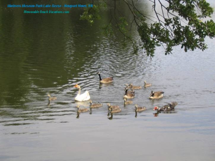 Mariners Museum Park Lake Geese - Virginia Vacation Beach Screensavers Pg